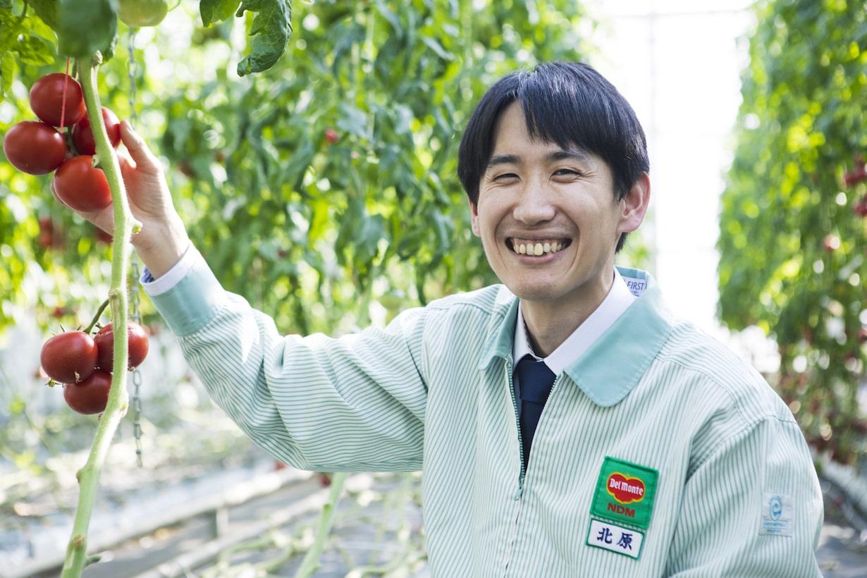 家庭菜園をはじめよう! あのデルモンテが発売しているトマト苗が育てやすくておいしいらしい